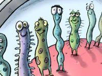 bacteria copy